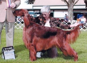 Rusty win Best of Breed Yuba City 10-16-10 (1)-page-001, cropped